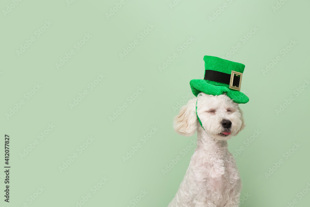 Fototapeta Cute dog with green hat on color background. St. Patrick's Day celebration