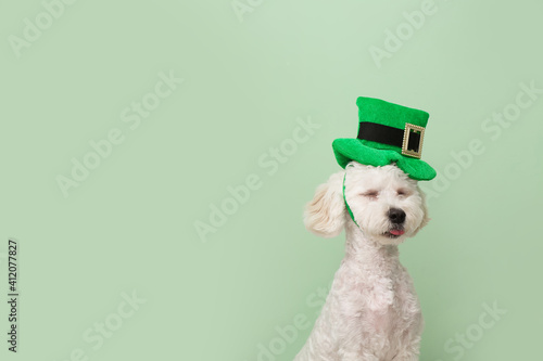 Tela Cute dog with green hat on color background