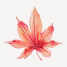 Vintage Maple Leaf Design Element Vector