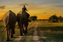 Elephant Walking In The Savannah During Sunset