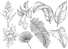 Black And White Tropical Flowers And Leaves. Set Of Hand Drawn Jungle Leaves And Exotic Plants
