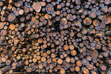 Stacked Of Felled Logs Timber Wallpaper Background