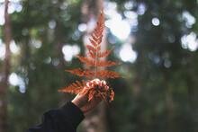 Leatherleaf Fern With Beautiful Nature Background