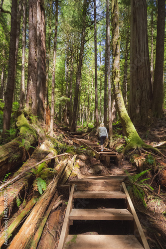 Canvas Print A young caucasian woman explores the ancient old growth pacific northwest rainforest Upper Avatar Grove near Port Renfrew on Vancouver Island, British Columbia, Canada