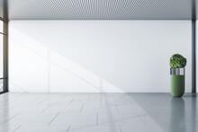 Sunny Modern Empty Room With Blank Light Wall , Grey Floor And Green Shrub Vase. Mockup. 3D Rendering