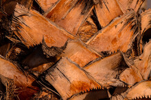 Macro Of A Palm Tree Trunk, Palm Tree Trunk Texture