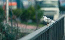 Bridge Handrail And Seagull, Batumi, Georgia