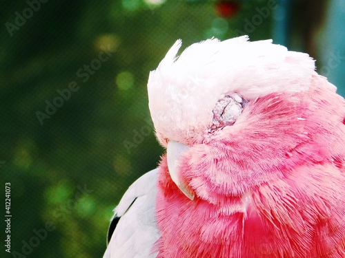 Canvas Print Close-up Of Parrot Sleeping In Cage