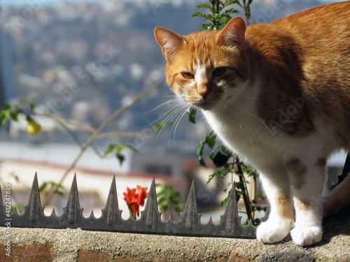 Obraz na plátně gato atigrado