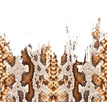 Seamless Brush Effects Snake Texture