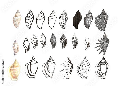 Black and white stylization of seashells Fototapet