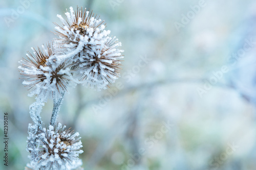 Photo The plant covered with frost