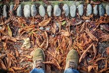 Standing On Autumn Leaves