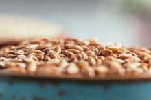 Spelta Seeds