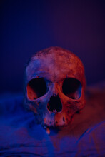 Human Skull Illuminate With Blue An Red Lights