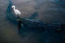 Bird On A Crocodile
