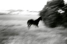 Blurry Horse Outdoors