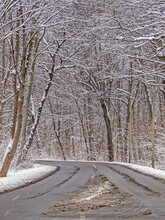 Road Into A Wintery Forest