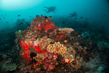 Underwater Photography, Scuba Divers Swimming Among Colorful Reef Ecosystem Surrounded By Tropical Reef Fish. Colorful Reef Life, Tropical Ocean Scene