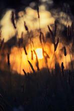 Dry Grass During Sunrise