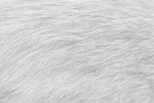 Line Patterns Fur Cat Texture White Gray  Background