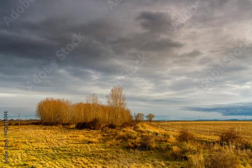 Landscape with meadow, agricultural field, poplar forest and cloudy sky in the Comarca de El Páramo, León, Spain. © LFRabanedo