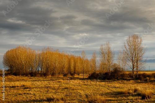 Landscape with meadow, poplar forest and cloudy sky in the El Páramo region, León, Spain. © LFRabanedo