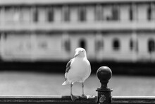 Seagull Perching On Railing