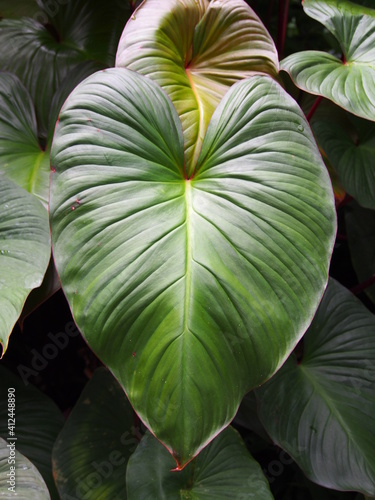 Fototapety, obrazy: Close-up Of Green Leaves