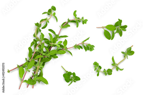 Obraz na plátne Oregano or marjoram leaves isolated on white background with clipping path and full depth of field