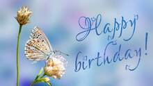 Happy Birthday Butterfly Greeting Card Or Poster. Adonis Blue Butterfly On A Wild Meadow Flower On Blurred Blue Background.