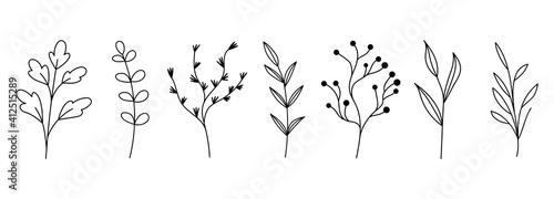 Photo Botanical plant set