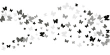 Fairy Black Butterflies Isolated Vector Illustration. Summer Beautiful Insects. Simple Butterflies Isolated Fantasy Wallpaper. Delicate Wings Moths Patten. Garden Creatures.