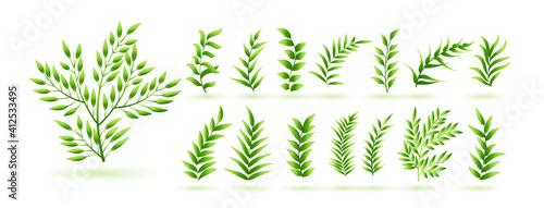 Fotografie, Obraz natural green herb leaves botanical collection design