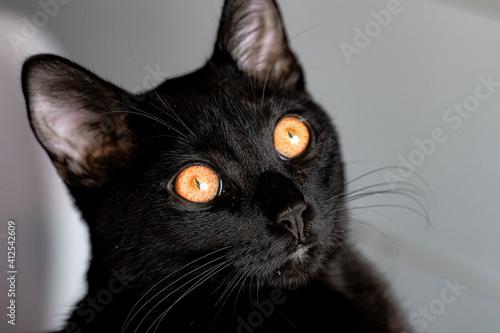 Fototapeta Macro de un gato