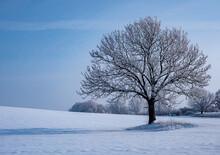 Einsamer Baum Steht In Einer Winterlandschaft Bei Frost