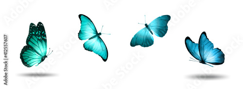 four tropical blue butterflies isolated on a white background