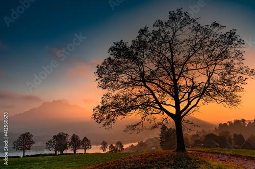 Valokuvatapetti Silhouette Tree On Field Against Sky At Sunset