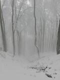hiking in snow in mountains in Reka,  Czech Republic