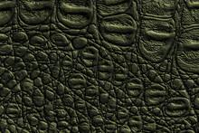 Dark Green Leather Texture Background, Closeup. Reptile Olive Skin, Macro.