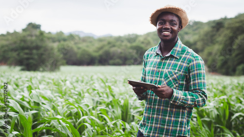 Fototapeta African Farmer stand in the green farm with holding tablet.16:9 style obraz