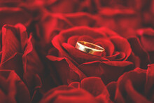 Wedding Rings On A Rose. Love Concept. Rose. Background. Rings.