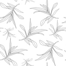 Rosemary Seamless Pattern On White. Rosemary Sketch. Black And White Pattern Of Rosemary