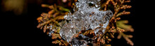 Close-up Of Ice Drop On The Plant At Winter Time. Colorful Detail Macro Panoramic Banner Shot.