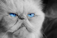 CLOSE ON CAT