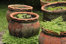 Mossy Pot With Plants