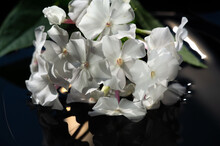 """Garden Flowers Impatiens Are Also Known As """"Busy Lizzie"""" And Its Name Is A Latin Word Describing How Its Seeds Fly Out Of The Pods When Ripe"""