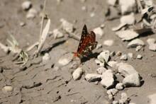 Butterflies Near The Merced Rivers