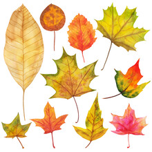 Autumn Leaves Painted By Watercolor