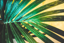 Palm Leaves On Yellow Background. Houseplant Conccept.